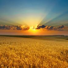 Фото Sunrise