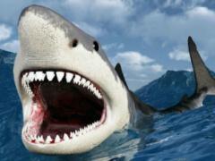 Как рыба не съела акулу