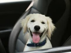 Ломбард помог найти верного пса