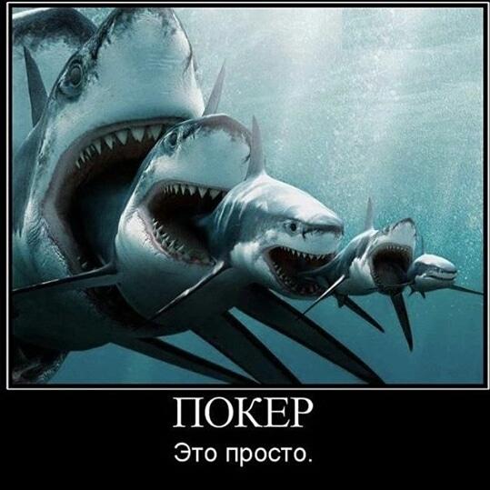 акулой читать без покер с онлайн регистрации полностью бесплатно