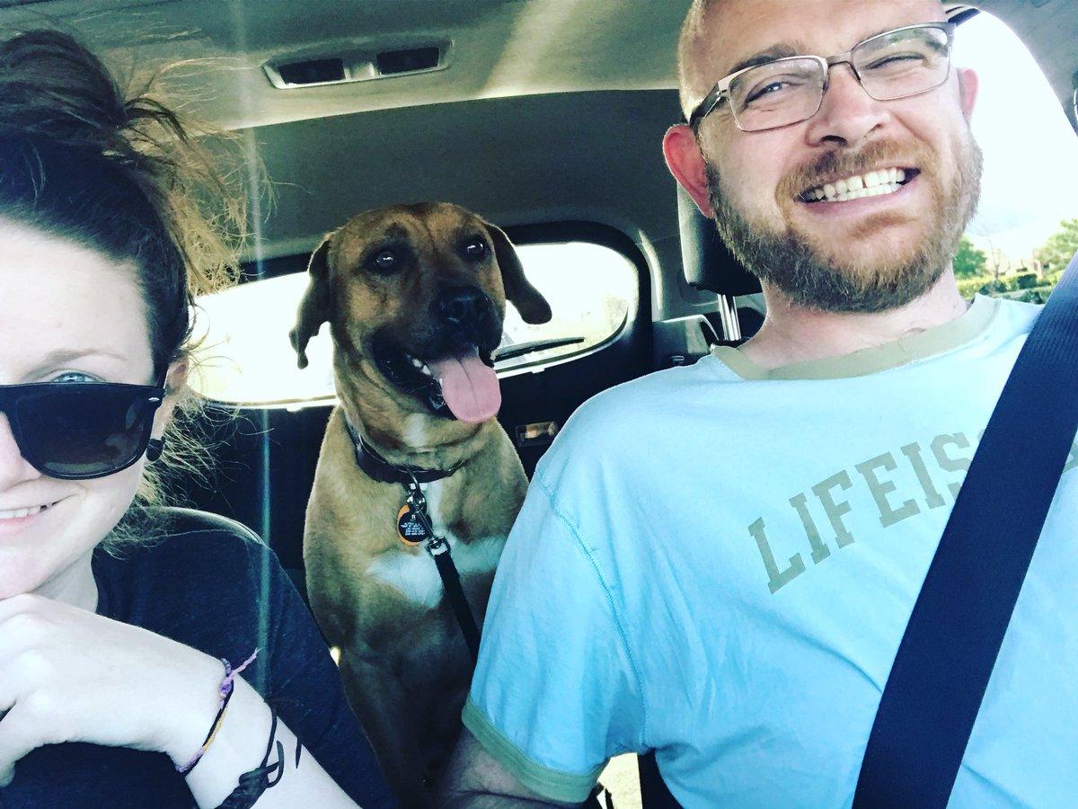 Собака и путешествия