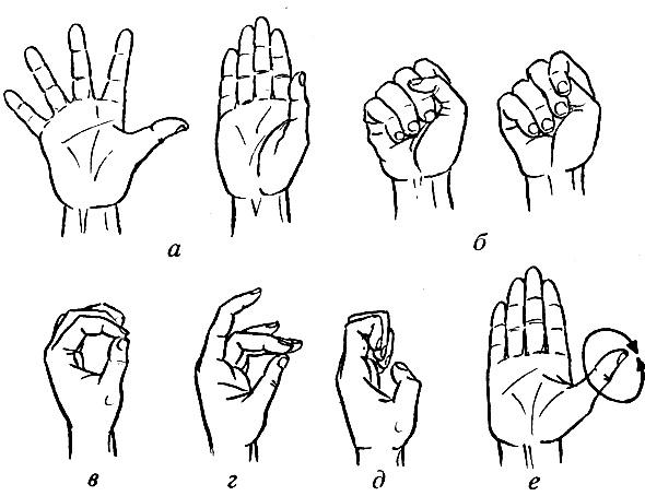 Пальцы и кисти